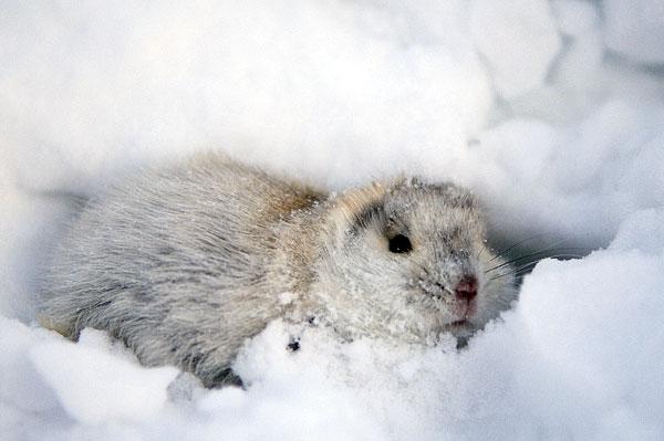 Can I haz snow pls? Immagine  MacPherson, A. H.