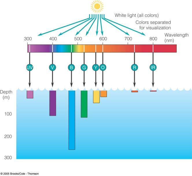 Parte della radiazione elettromagnetica e le profondità mediamente raggiunte dalle varie lunghezze d'onda. Immagine