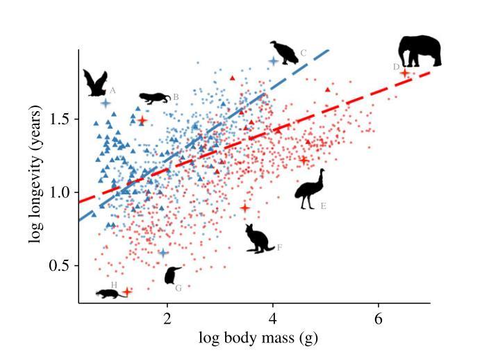 Relazione tra massa corporea e longevità in uccelli e mammiferi. Immagine modificata da Healy et al.2014