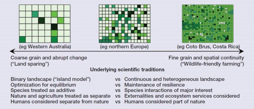 Schema di confronto fra il land sparing e il land sharing, che non ho intenzione di spiegare più di così. Immagine di Fischer et al., 2008.