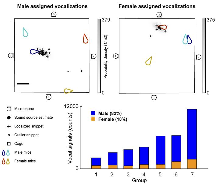 Grafici molto simpa. Grazie al nuovo metodo si riesce a capire quale topo (le gocce) emette un richiamo. In basso trovate anche che i topi maschi, in blu, emettono molti più richiami rispetto alle femmine quando si incontrano. Immagine modificata da Neunuebel et al. 2015